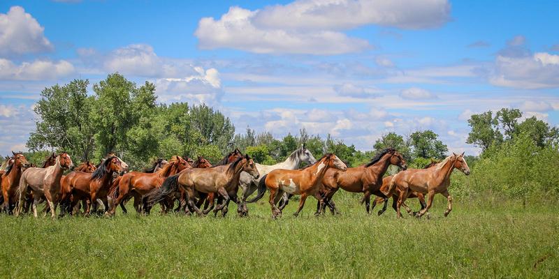 The Herd 3